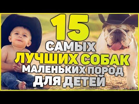 ТОП 15 Лучших Собак Для Детей - Рейтинг 2020 года