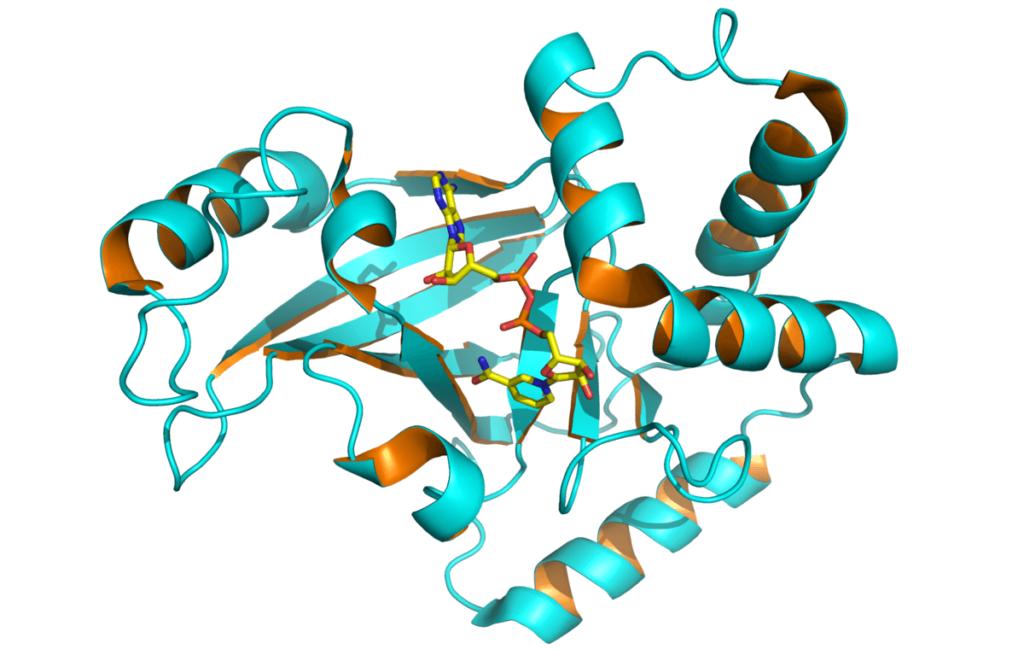 Токсин ботулина